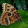BUTTERFLIES : 1 gallery with 9 photos