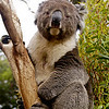 MARSUPIALS : 1 gallery with 3 photos